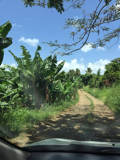 La plantation: l'accès à la propriété