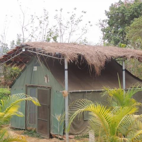 Jungle Tents in Dandeli Forest - Full Board Included