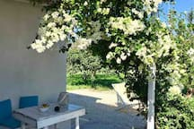 white bouganvillea in the patio of the cottage