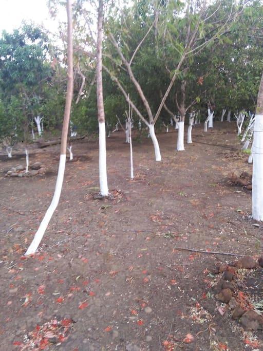 Amplia zona de árboles