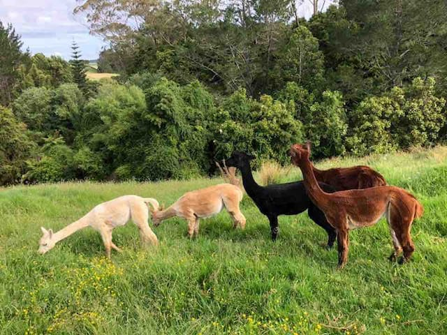 Cute Alpaca! Stunning Rural New Private GuestWing