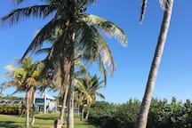 Tropical Point Park