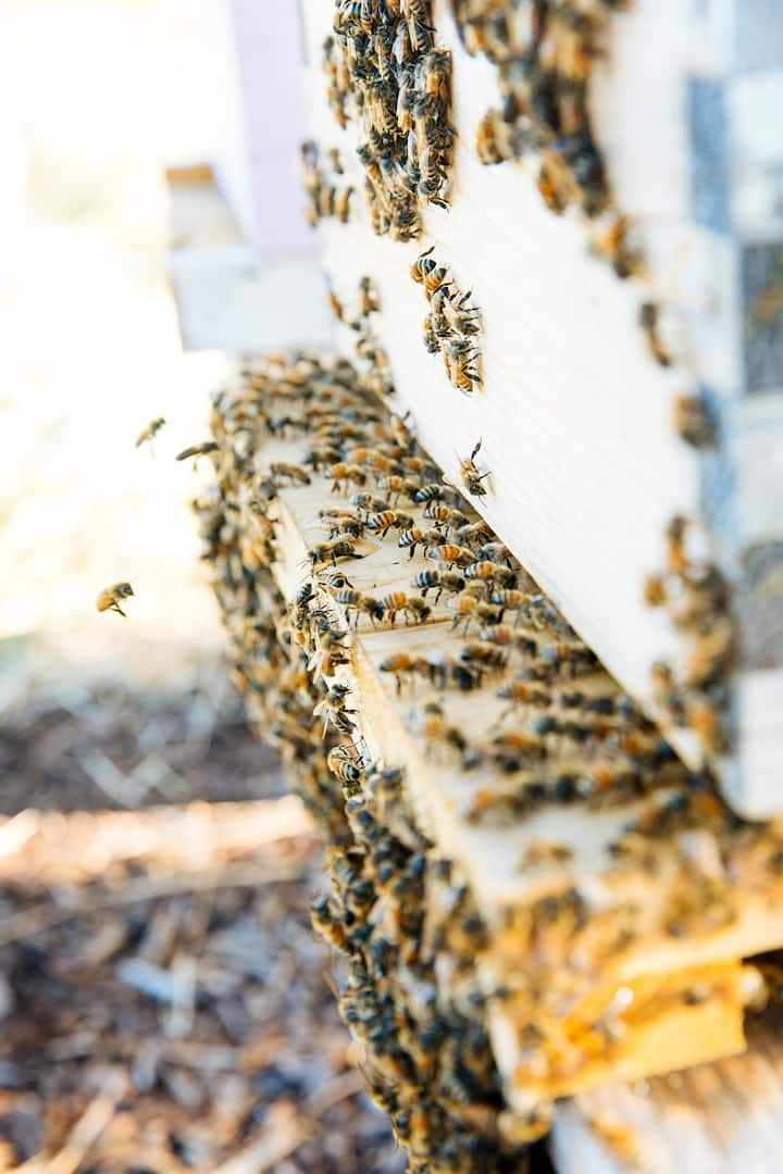Watch the bees at work.