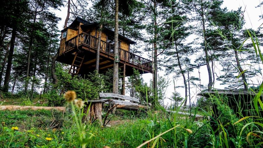 Domček v korunách borovíc