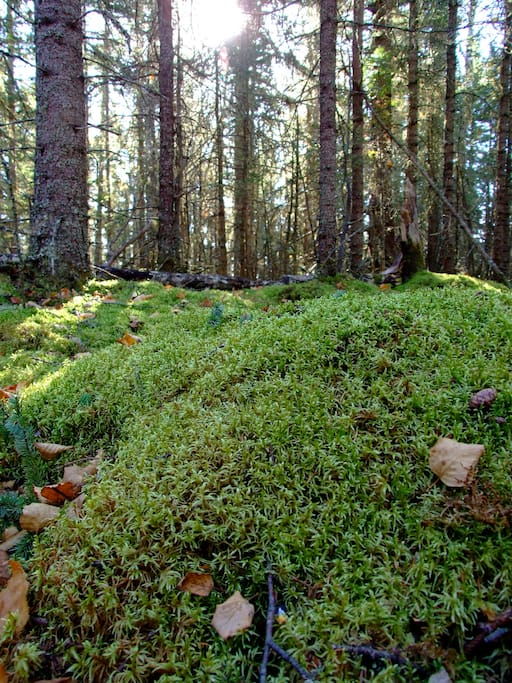 Moss-covered forest, on-site.