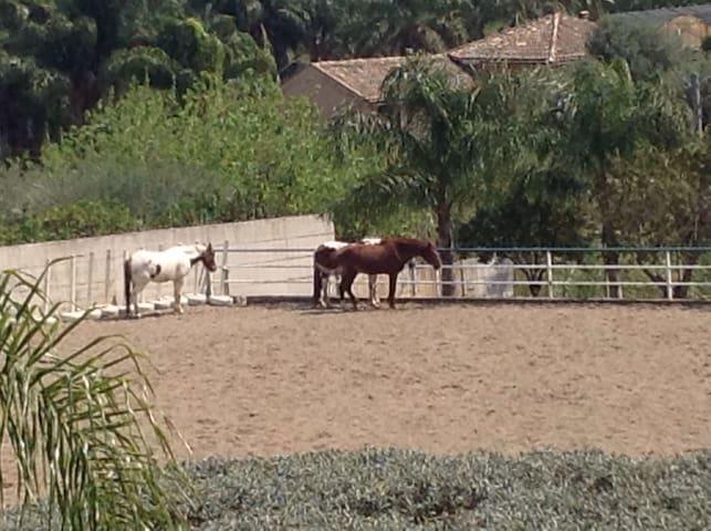 Rural & cultural  FARM-INN - calatabiano  - Villa