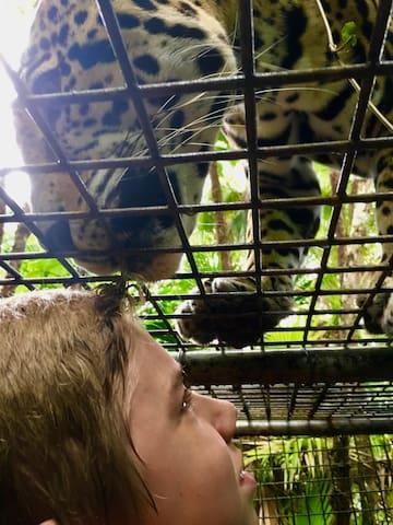 Kissed by a Jaguar