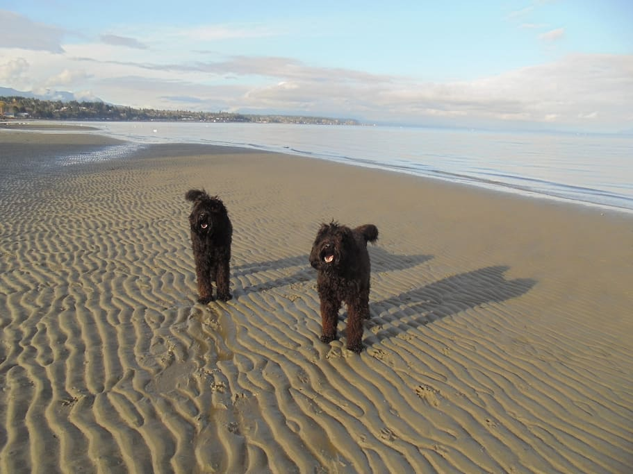 Our 2 dogs .... Ellie & Sophie