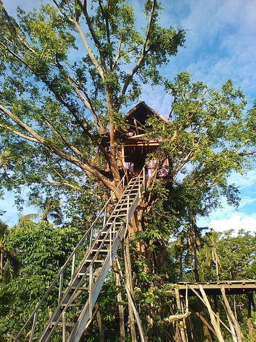 Our tree top house - 12 meters high