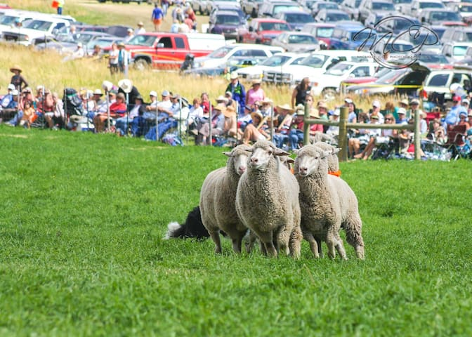 Don't miss the world renown Meeker Sheepdog Trials in September!