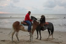Paarden rit Strand