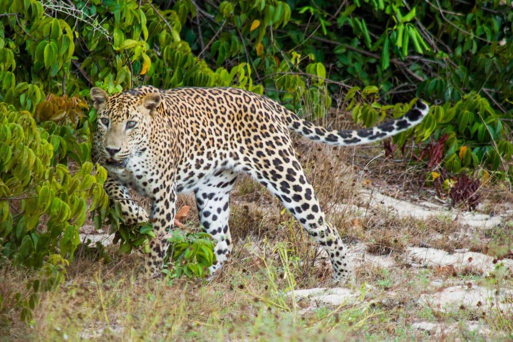 Safari sight