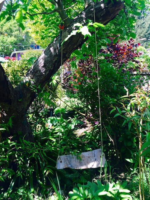 Home made swing on the apple tree.