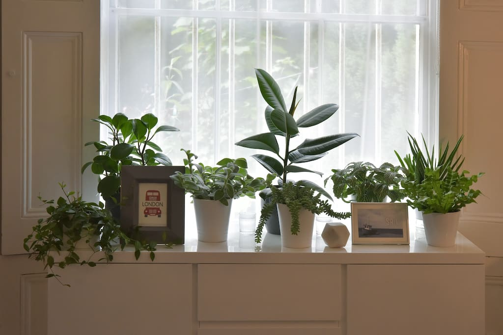 My plant collection in the living room! (space accessible for breakfast only)