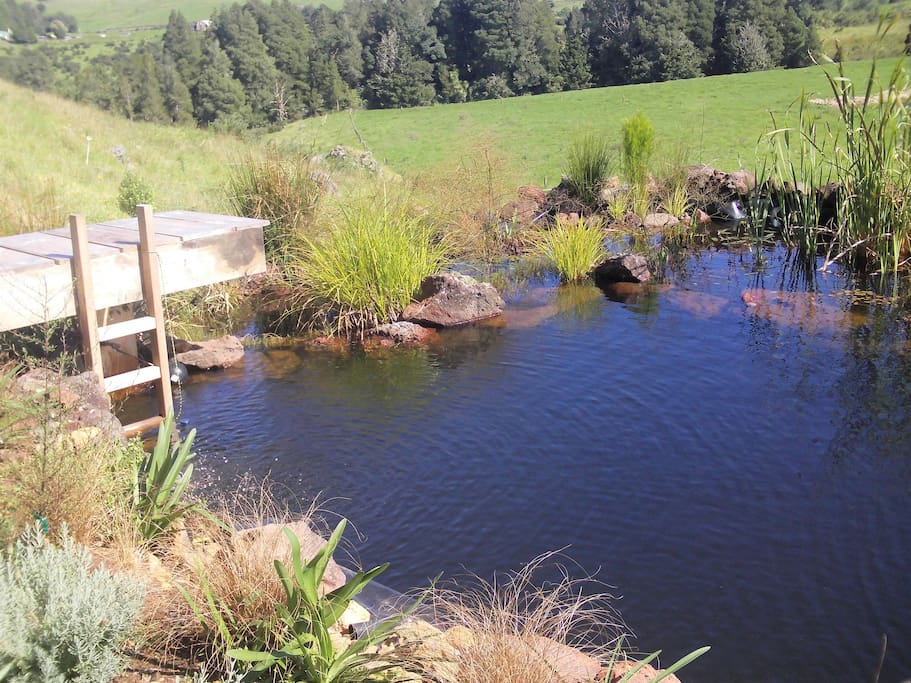 Our natural swimming pond
