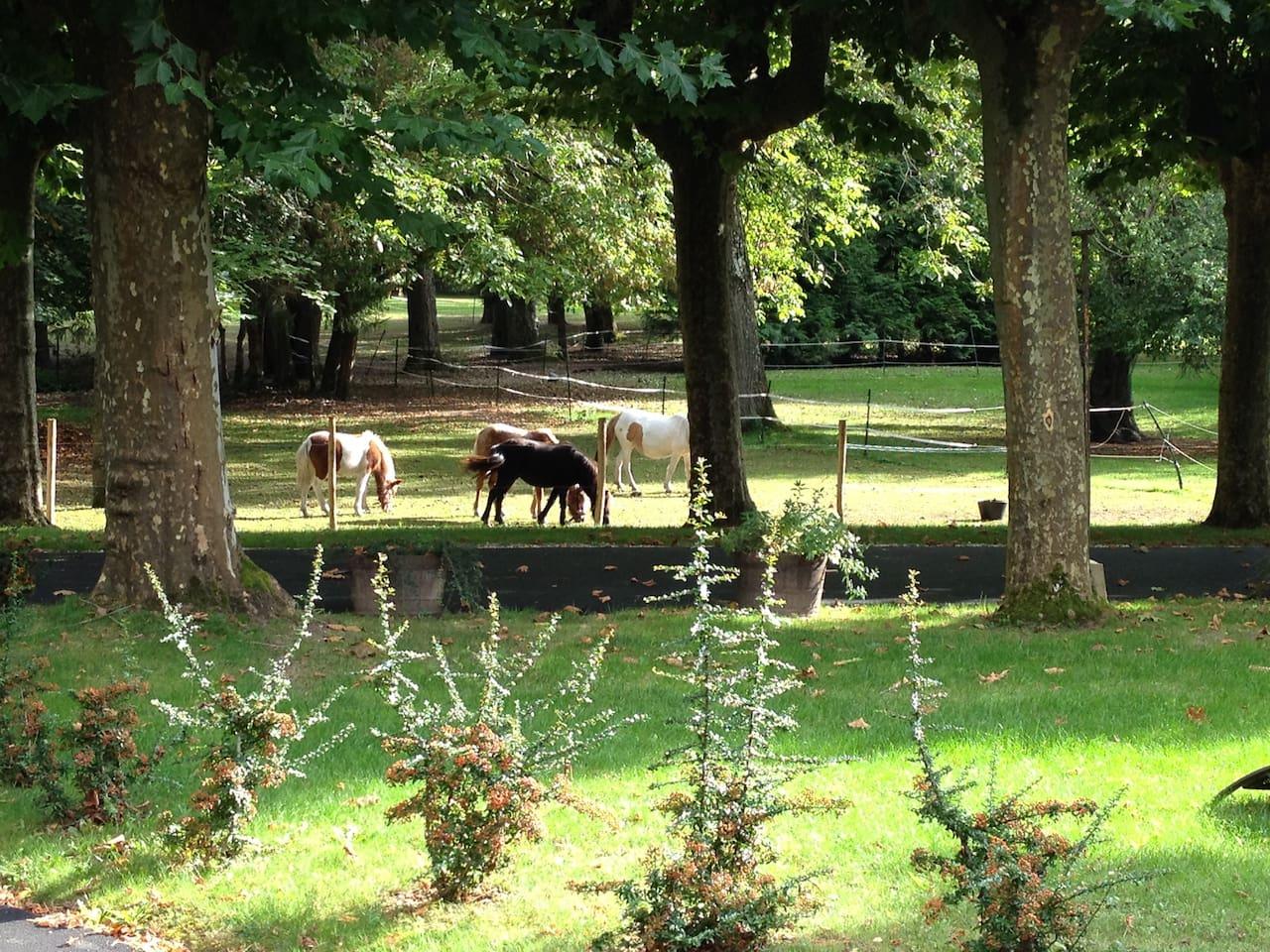 parc et poneys