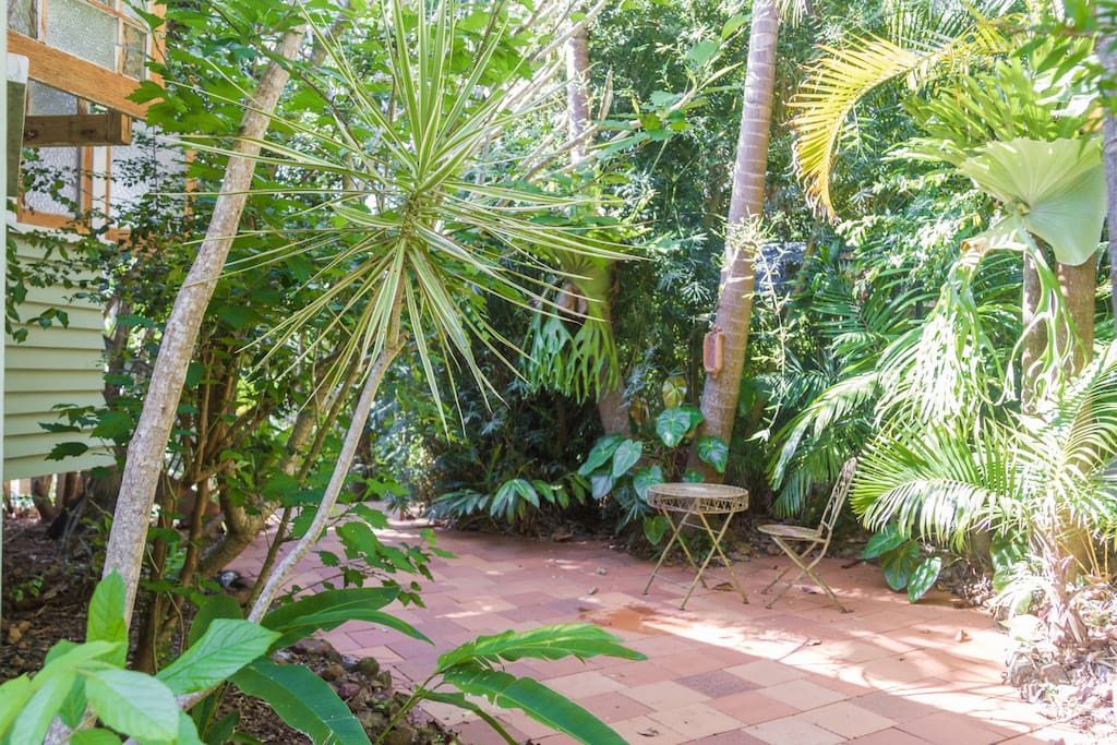 Outside patio area with the Bangalow palms, tree ferns and bromeliads.