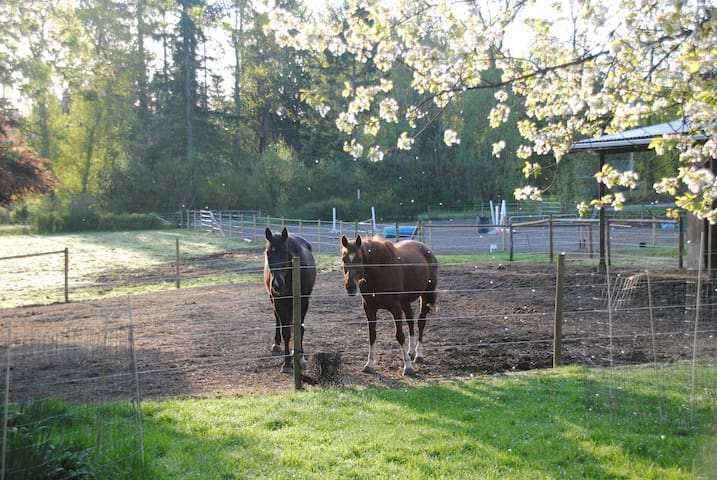 Room among horses and fruit trees in Duncan