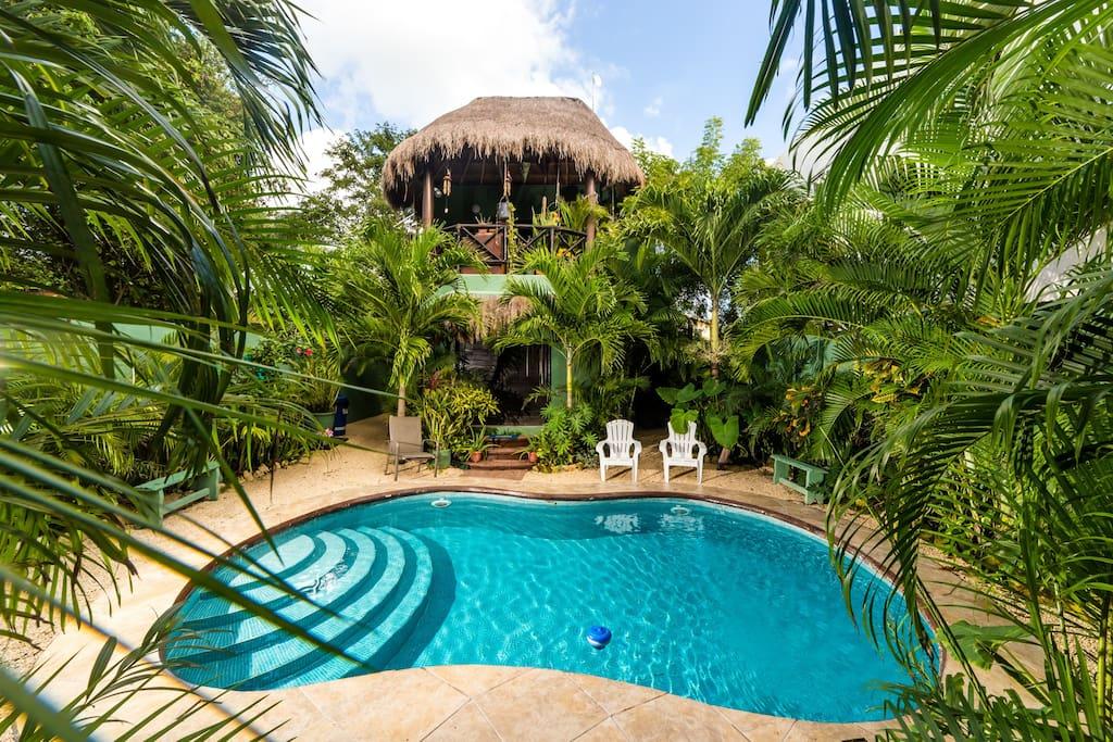 Gorgeous pool and botanical garden