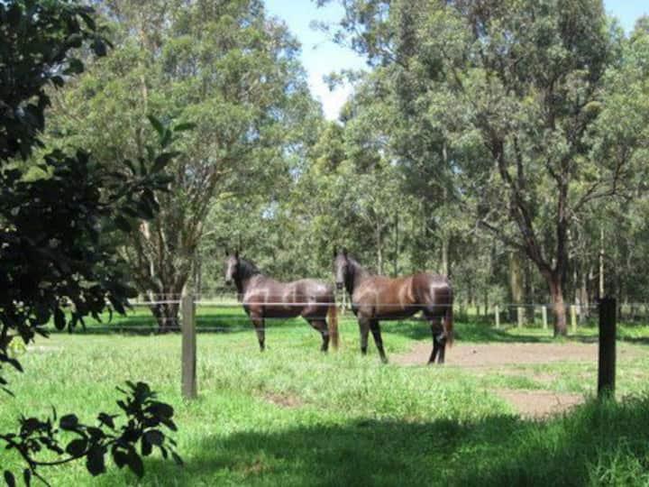Horse Farm Experience