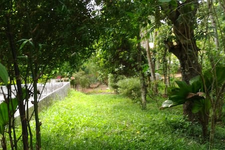 A spice farm Stay at Thekkady, Kumily
