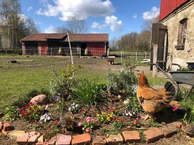 Urlaub mit glücklichen Hühnern