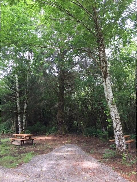 Campsite Near Forks WA