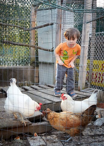Family Friendly! Venture into the Chicken Coop.