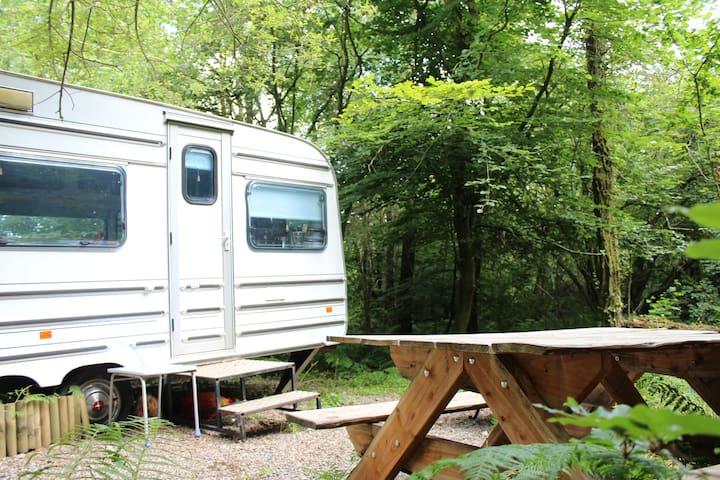 Bluebell - Woodland Gypsy Caravan - Devon - Other