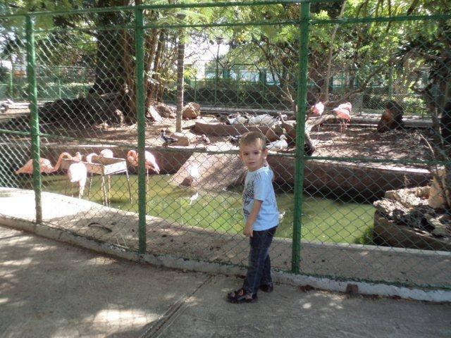 Una vista del bello zoológico a 5 minutos en carro de la casa