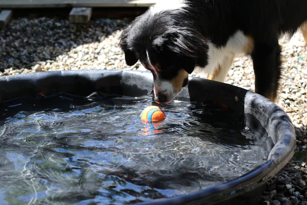 Rocket will share her pool