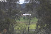 The Homestead viewed from our bush nature observatory