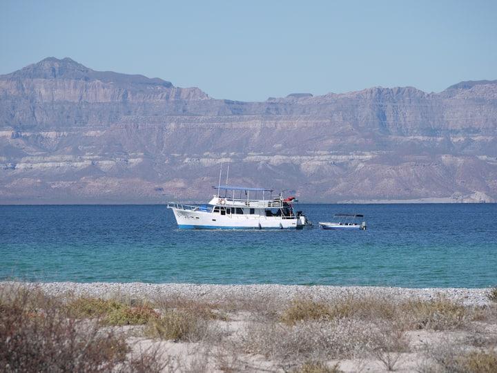 Boat Charter in La Paz and the Sea of Cortez