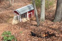 Our chickens and their coop