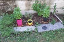 Petit jardin de saveurs, Thym, romarin, sarriette, basilics, menthes ...