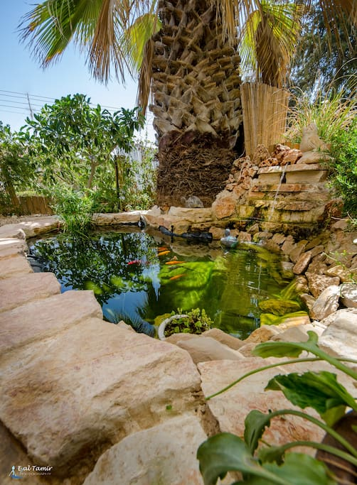The fish pond in the yard