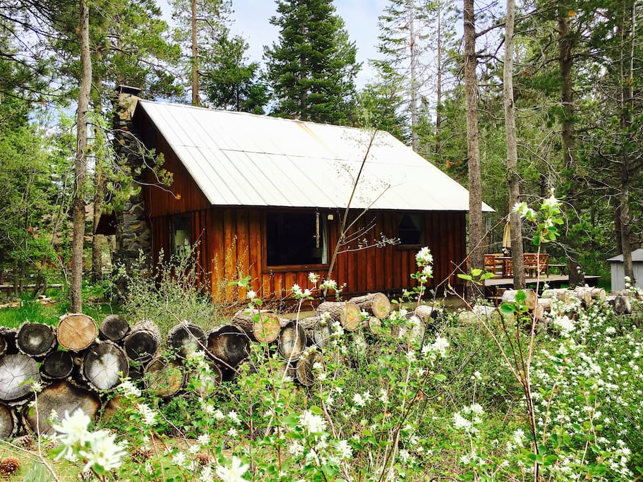 Our cabin amongst the spring Juneberry