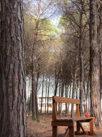 Exclusive Private Villa | Direct access to beach