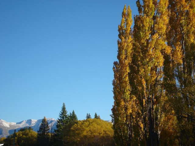 Trees and Mountains view