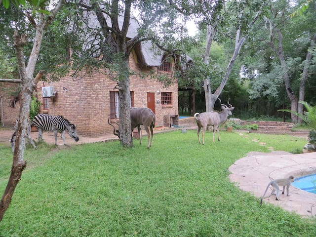 RafikisResthouse, Animals' Eden at Kruger river