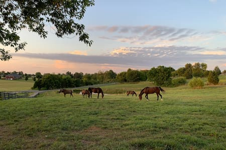 Creekview Farm: Bourbon, Horses, and Sunsets
