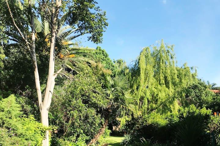Linden garden retreat
