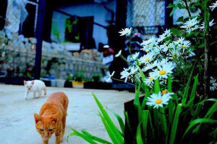 Marguerite Shelter - Thành phố Đà Lạt - Huis