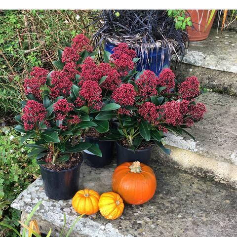 Always plenty of autumn colour here on the farm.