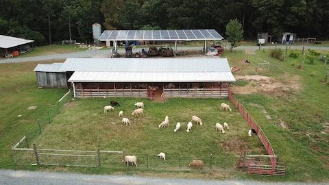 Farm stay at the Montgomery Sheep Farm