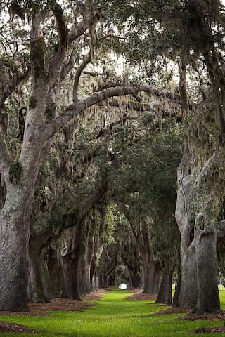 Nature Avenue of the Oaks..