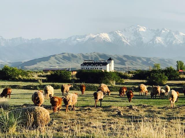 【享受乌鲁木齐的四季】牧马天山 / 故乡庄院