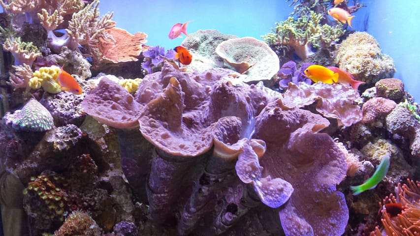 Monterey Bay Aquarium 4 miles from the house
