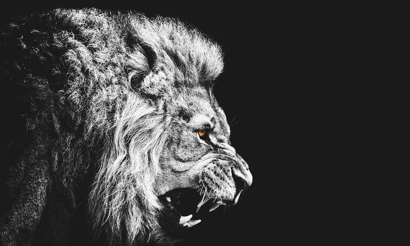 We call it..The lion´s cave, you´ll want to return - León - Casa