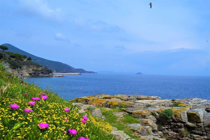 Isola d'Elba: Appartamento 6 posti letto,centrale.